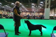 dell at crufts2.jpg